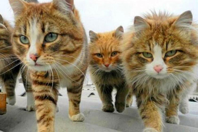 Times: İhraçlar sürerken, metroda kedi videosu yayımlanıyor