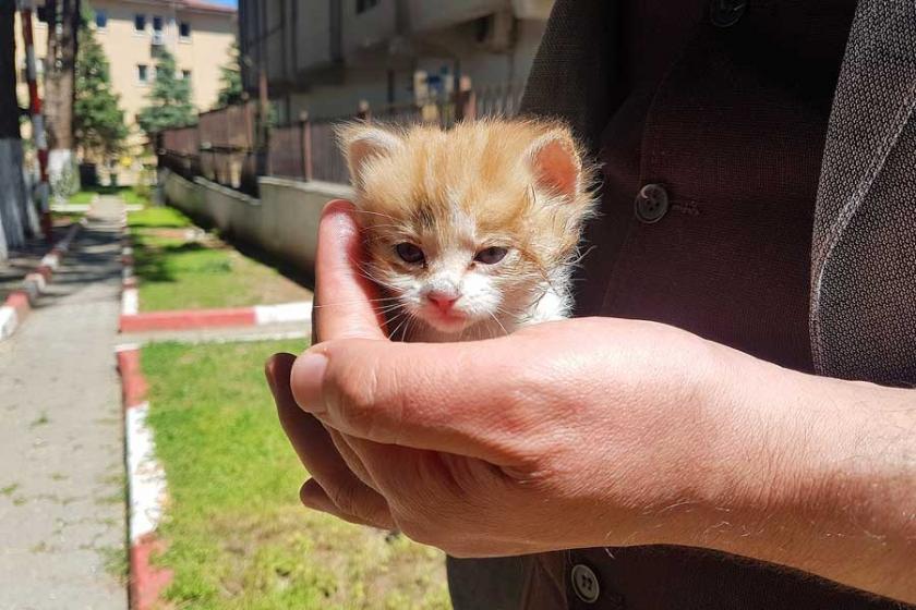 İtfaiye, kurtardığı yavru kediye '110' ismini verdi