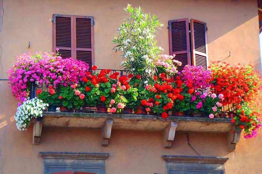Balkonu bahçeye çeviren çiçekler