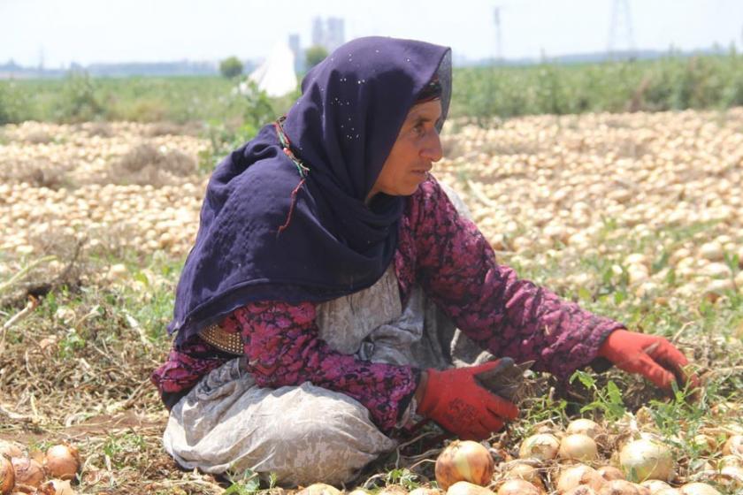 Mevsimlik tarım işçisi kadınların zor yaşamı