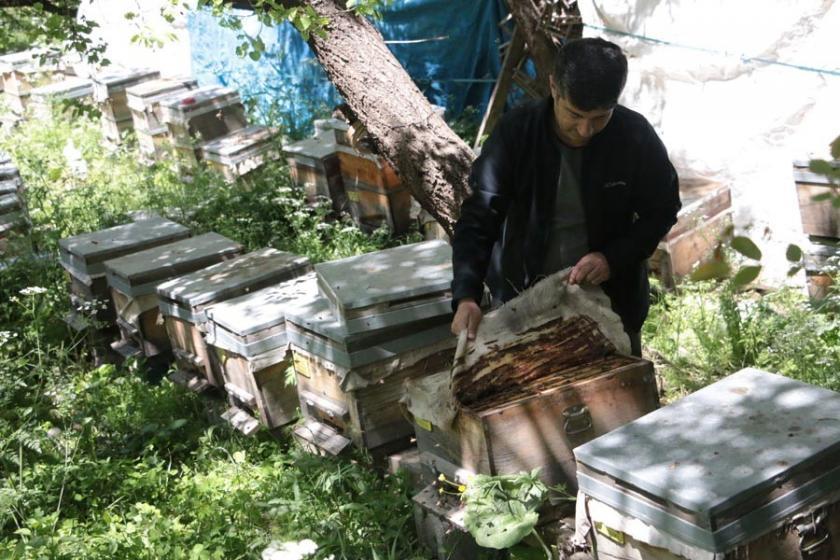 Yaylalar yasaklanınca arı kovanlarını bahçesine koydu