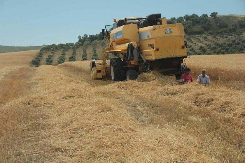 Buğday üreticisi: Devlet bizi tüccara mahkum etti