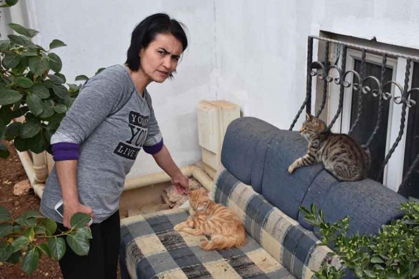 Uşak'ta kedi katliamı: 'Komşum, köpeklerine öldürttü'
