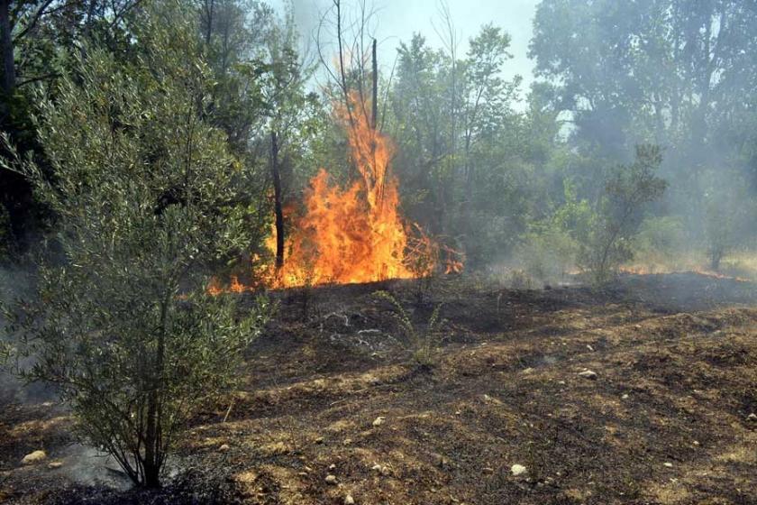 Seydikemer'de 300 zeytin ağacı yandı