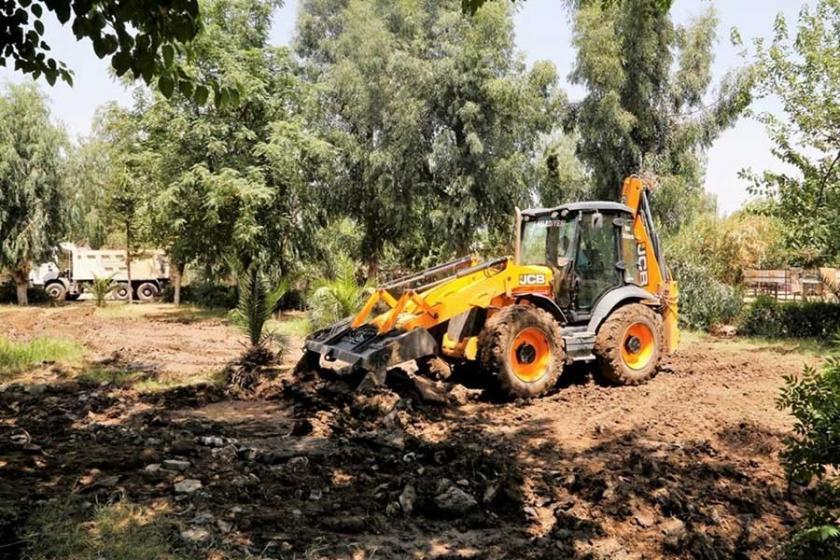 Kayyım çevreyi kirletiyor diyerek ağaçları kestirdi
