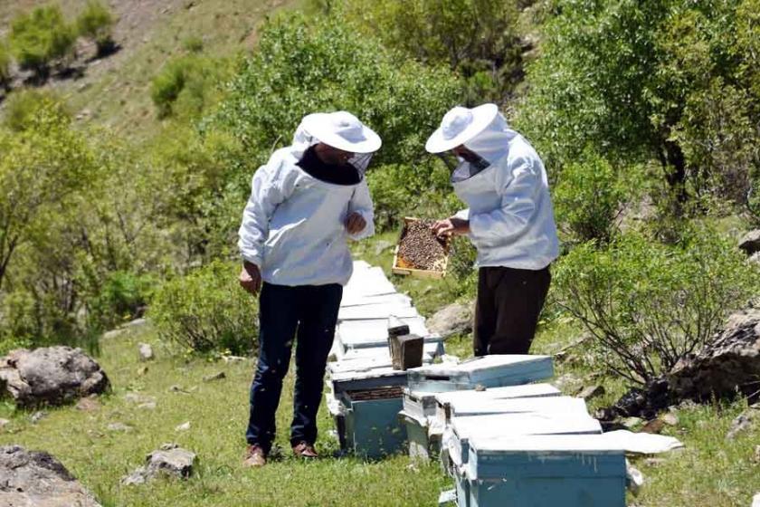 Çataklı arıcılar sıcaklık arttıkça yükseğe çıkıyor