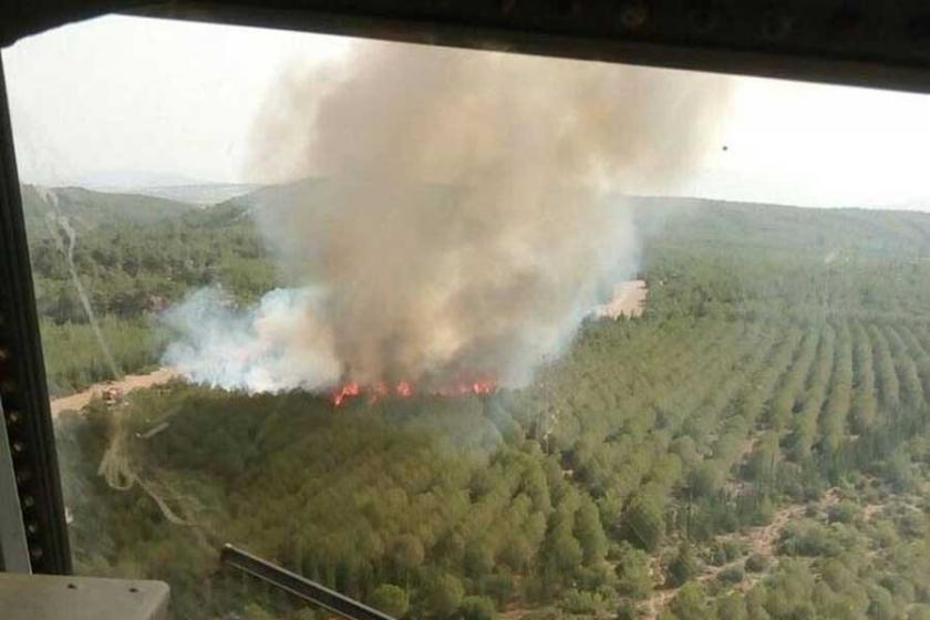 İzmir'de ağaçlandırma sahasında yangın çıktı