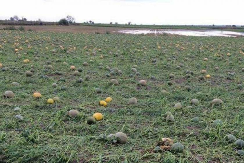 Hükümet binlerce çiftçiye  200 milyonu çok gördü