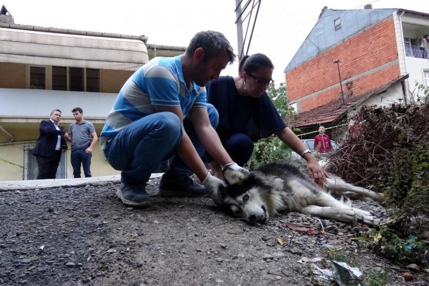 'Köpek sokağa işiyor' diye sahibini ve köpeği vurdu