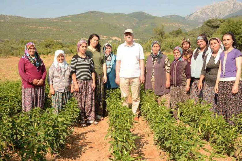 Türkiye'de kırsal nüfus hızla azalıyor