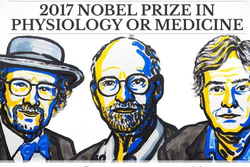 2017 Nobel Tıp Ödülü, biyolojik saat çalışmasına verildi