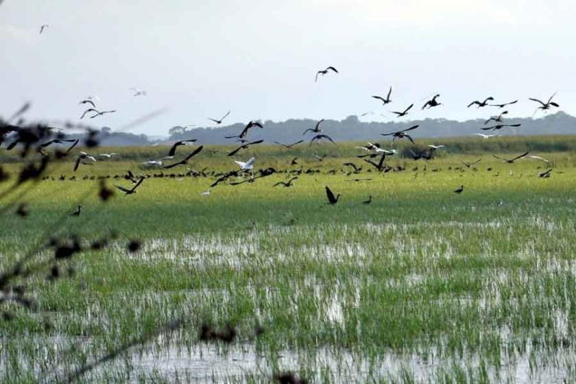 Kızılırmak Deltası Kuş Cenneti'nde piknik yapılmasına tepki