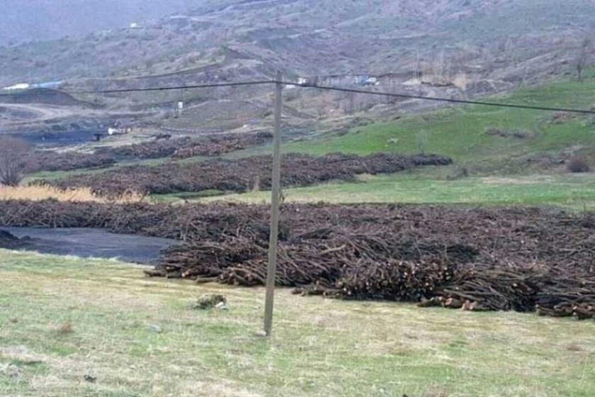 Mardin'de binlerce ağaç 'güvenlik' gerekçesiyle kesiliyor