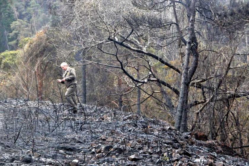 Çamburnu ormanındaki yangında ağaçların yüzde 30'u kurumuş