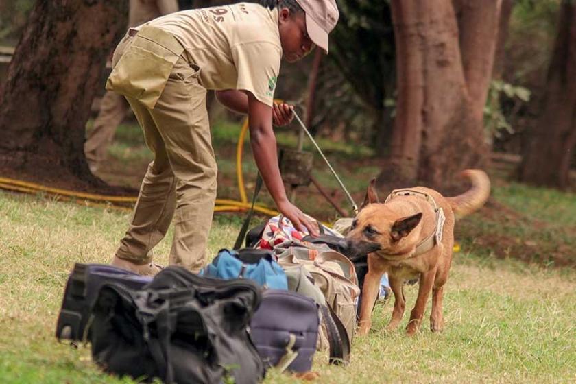 Afrika'da vahşi yaşam köpeklere emanet
