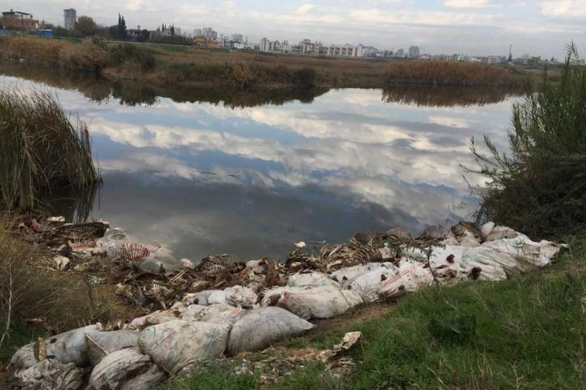 Adana'da at ve eşek kemikleri bulundu