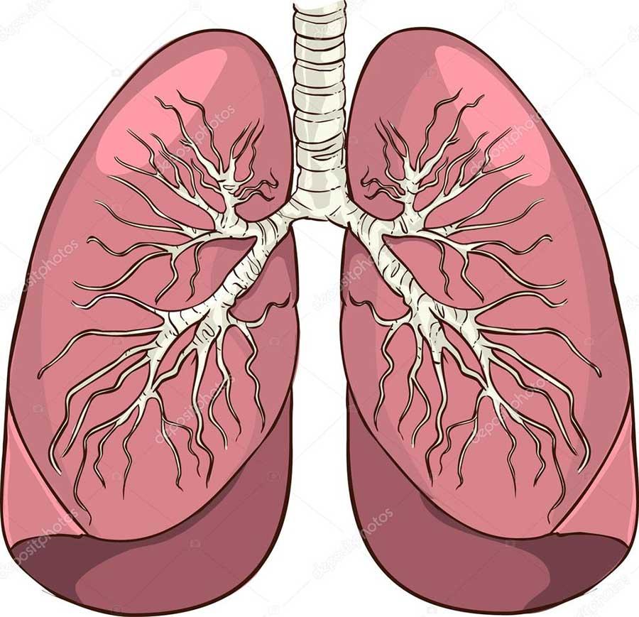 Akciğer Hastalıklarına Ilişkin Doğru Bilinen Yanlışlar Evrenselnet
