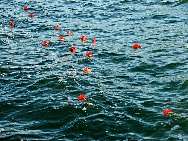 Çeşme'de 10 Ekim Ankara Katliamı'nda yitirilenler için denize karanfiller bırakıldı (Fotoğraf: DHA)