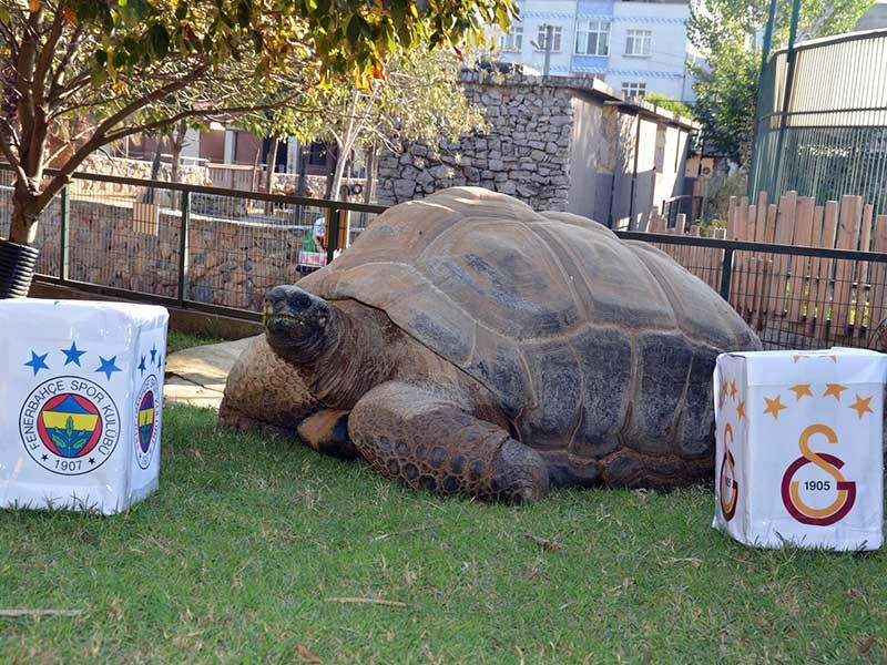 Darıca Hayvanat Bahçesinde yaşayan Tuki adlı kaplumbağa (Fotoğraf: DHA)