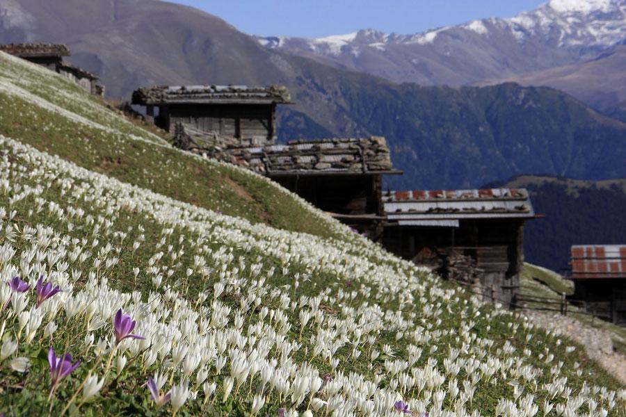 Çiçeklerin beyaza bürüdüğü yaylalarda muhteşem manzaralar oluştu