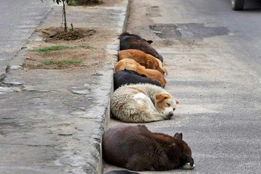 Sokak hayvanı