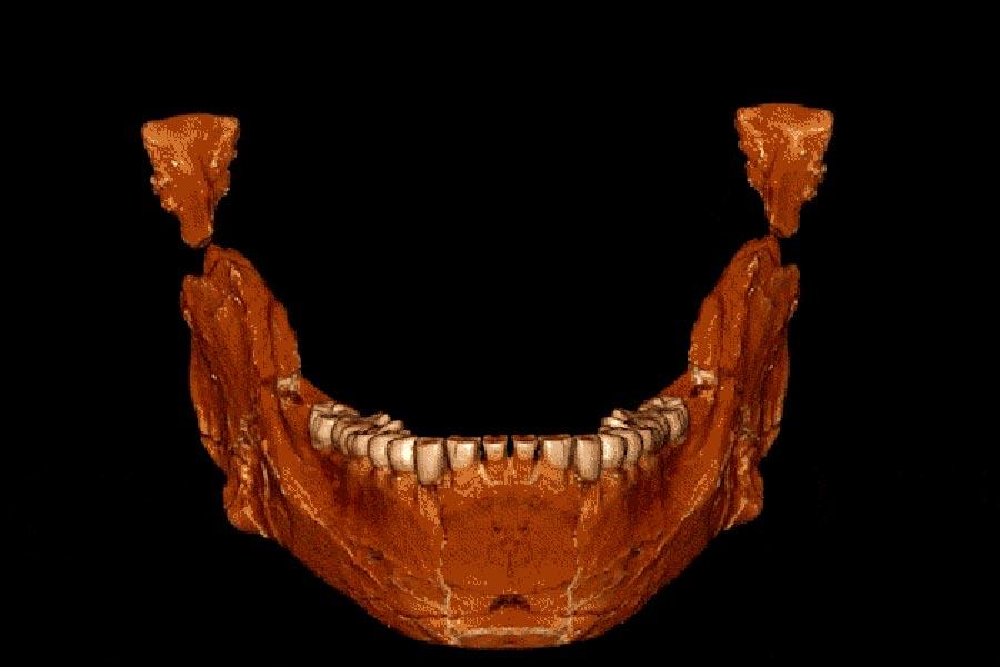 Bu mandibula (çene kemiği), Jebel Irhoud'ta keşfedilen ilk yetişkin mandibuladır. F: Jean-Jacques Hublin, MPI-EVA, Leipzig.