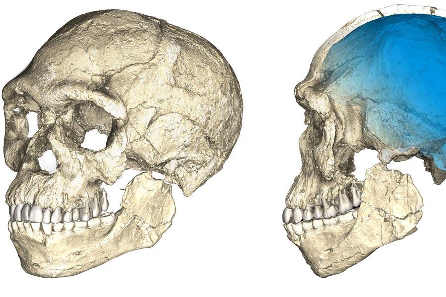Çoklu orijinal fosillerin mikro bilgisayarlı tomografik  taramalarına dayanan kompozit yeniden  yapılanmasının iki görünüşü.