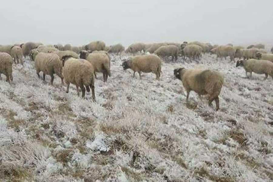Ordu'nun Kabadüz İlçesi Çambaşı Yaylası'na kar düştü