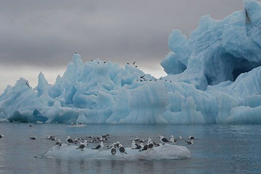Galler'deki Swansea Üniversitesinden bilim adamları, Batı Antarktika'dan büyük bir buz dağının koptuğunu bildirdi.