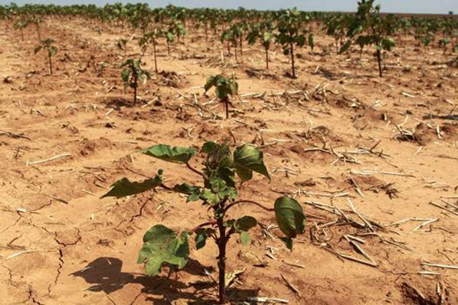 Sık sık yaşanan kuraklık ve sıcak hava tarımsal ürün kaybına yol açıyor.