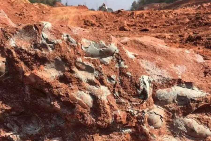 Çin'de 130 milyon yıllık dinozor yumurtası bulundu