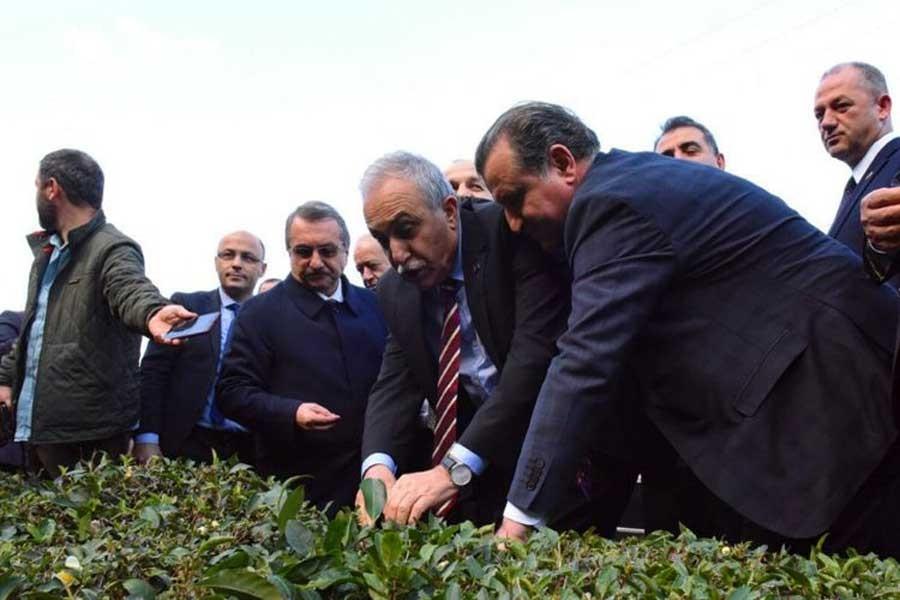 Fakıbaba'dan çayda organik tarım açıklaması