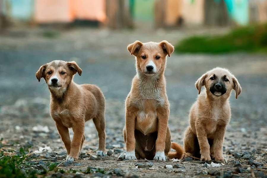 'Hayvanlara işkenceye verilecek cezalar caydırıcı değil'