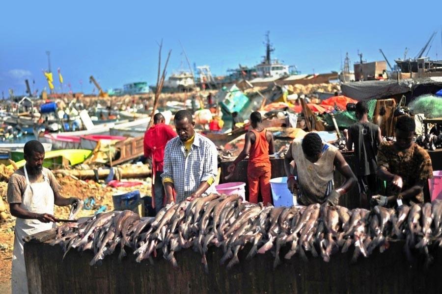 Et Sudan'dan, balık Somali'den