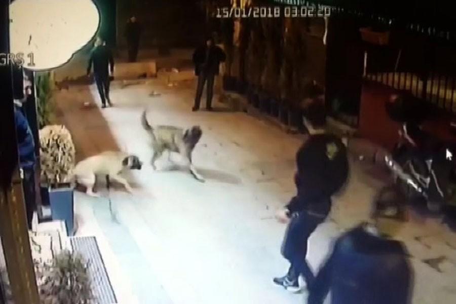 Sokak köpeklerini kemerle dövüp bıçakladılar!