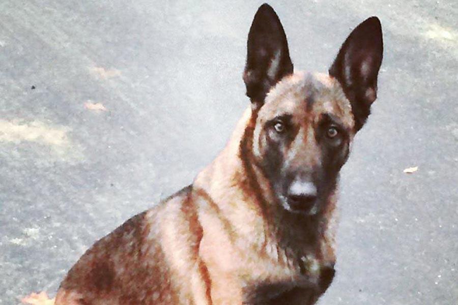 ABD'de polis köpeğini ısıran bir kişi tutuklandı