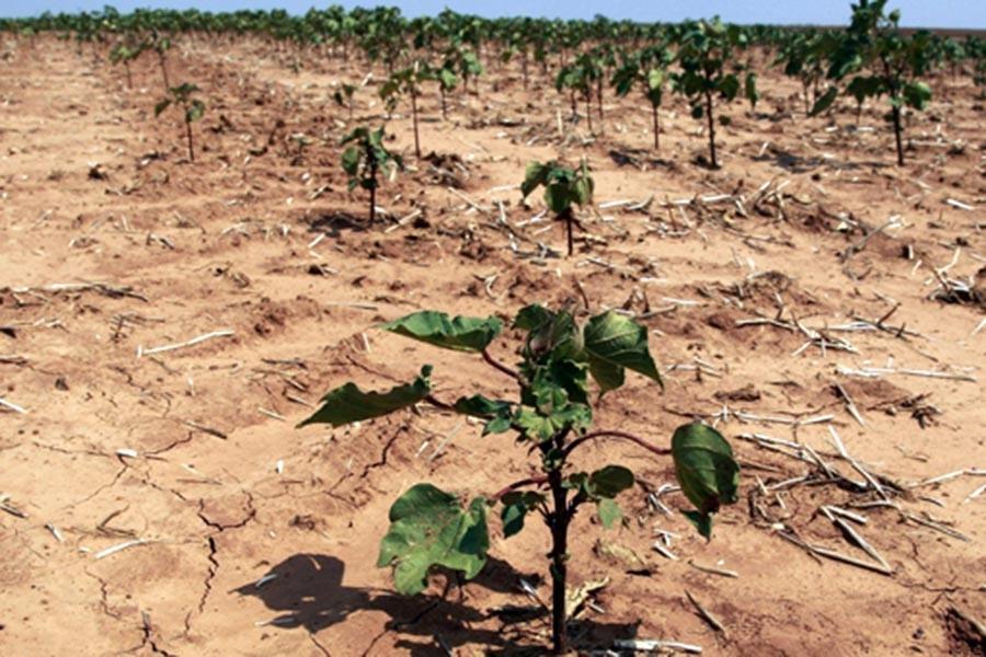 Tarımda kuraklık riski artıyor