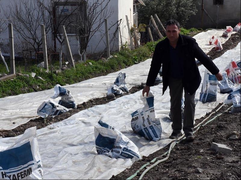 Manisa Saruhanlı tütün üreticileri (Fotoğraf: DHA)