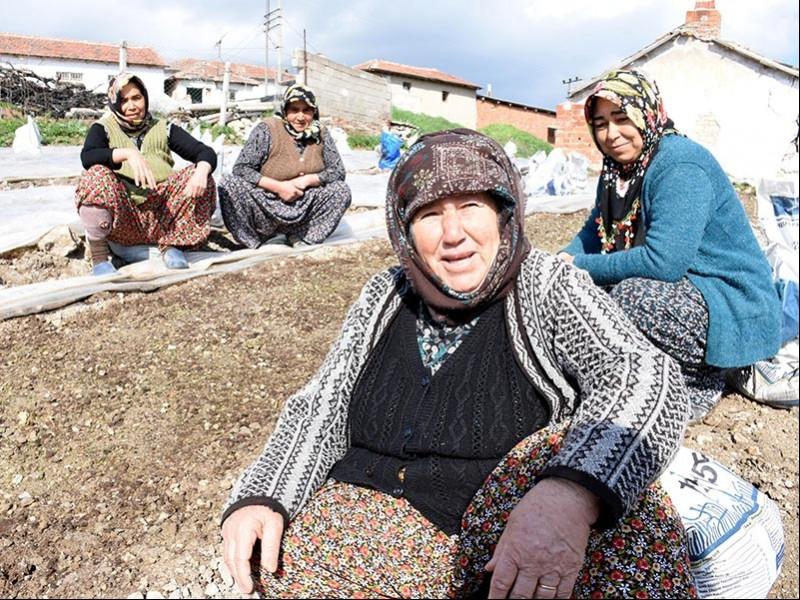 Manisa Saruhanlı tütün üreticisi kadınlar (Fotoğraf: DHA)