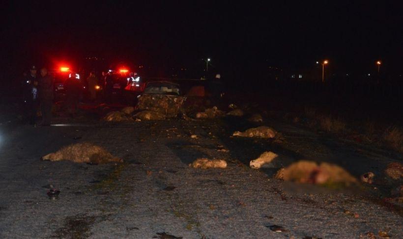 Niğde'de araç koyun sürüsüne daldı, 40 koyun öldü