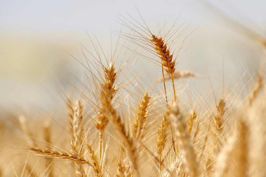 '2018'de tarımsal üretim azaldı, 2019'da gıda fiyatları artabilir'
