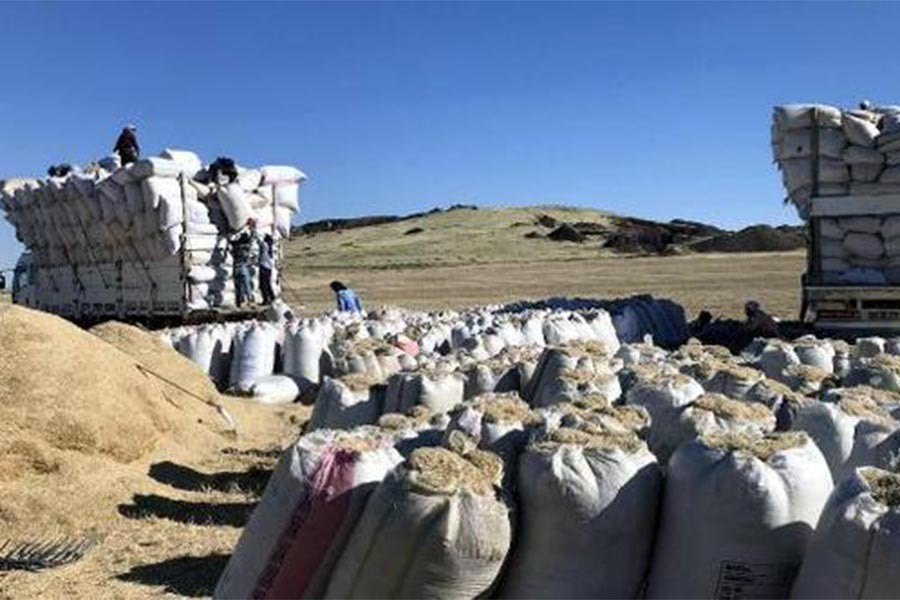 Samanın fiyatı yüzde 100 arttı