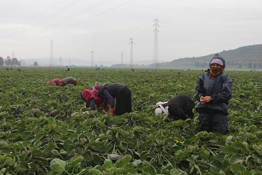 Torbalı'da tarım işçileri düşük yevmiyeye karşı iş bırakacak