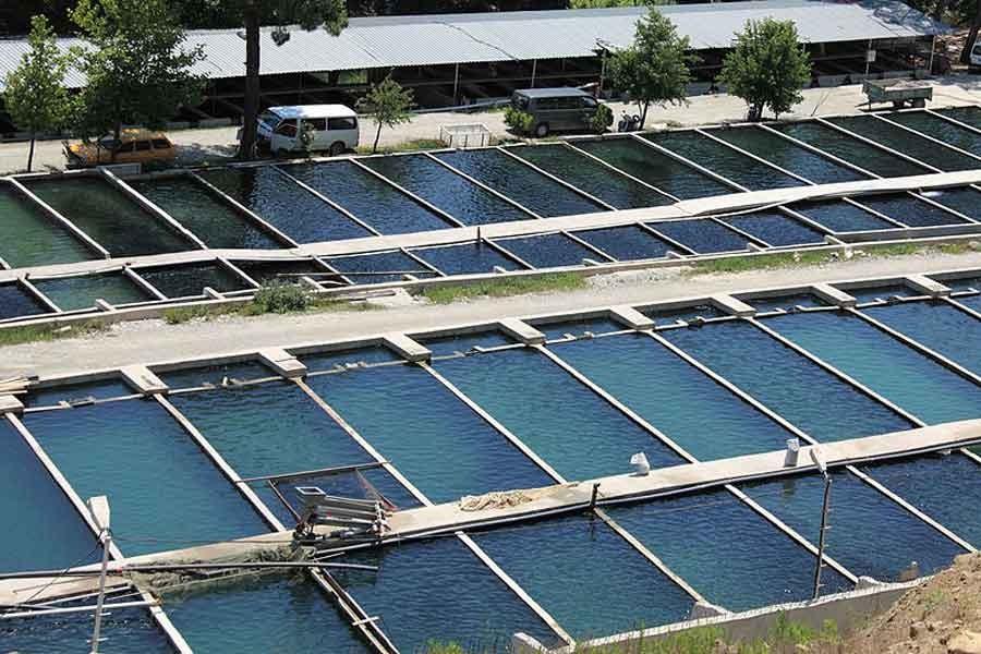 Mersin'de balık çiftliklerine tepki