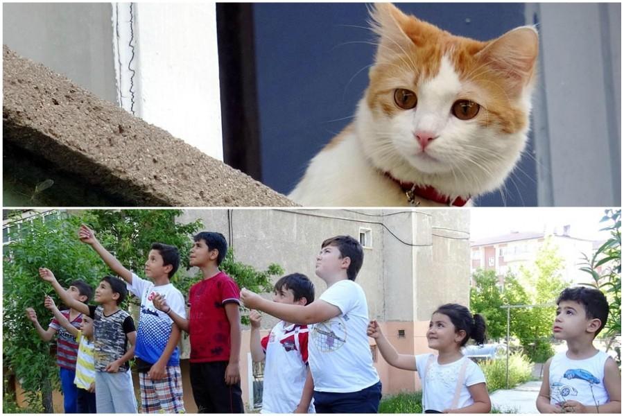 Evde tek kalan kedilerin imdadına mahalleli çocuklar yetişti
