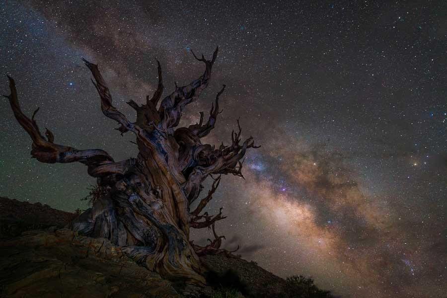 Galaksinin Koruyucusu