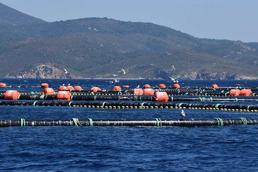 'Balık çiftlikleri önlenmesi mümkün olmayan sorunlara yol açar'