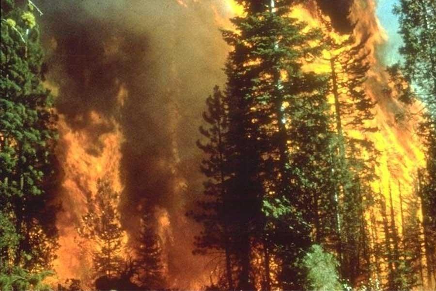 California tarihinin en büyük yangını sürüyor: En az 8 kişi öldü