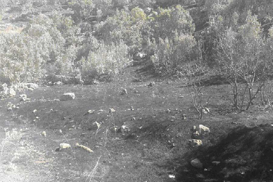 Ekoloji hareketi Mardin raporu: Yüzlerce meyve ağacı yandı