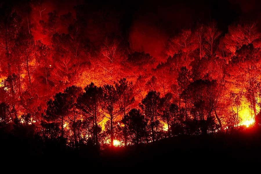 Ormanlarımız neden yanıyor?